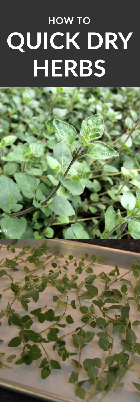 How to Quick Dry Herbs from your Garden