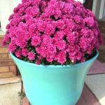 Mums in a container
