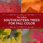 The 5 Best Southeastern Trees for Fall Color