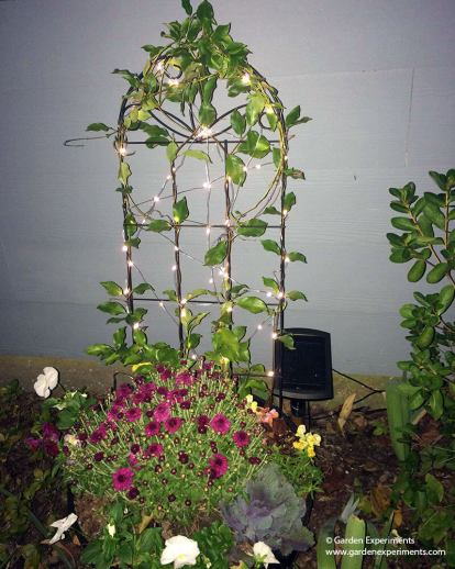Fairy Lights on the Container Garden Trellis