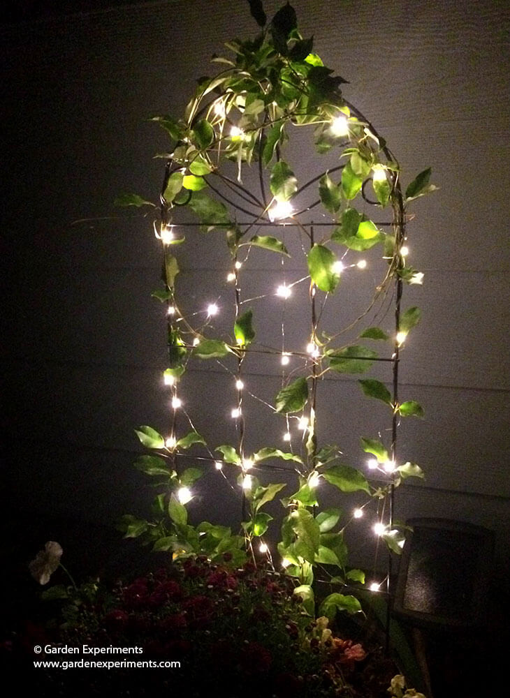 adding a little magic to my garden using fairy lights