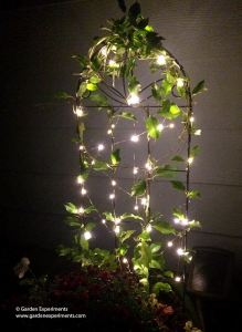 Adding A Little Magic to My Garden: Using Fairy Lights