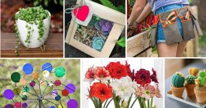 Gifts for Gardeners Less Than $30