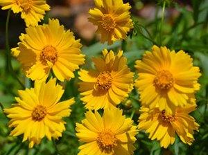 30 Plants to Feed & Host Butterflies in Your Garden