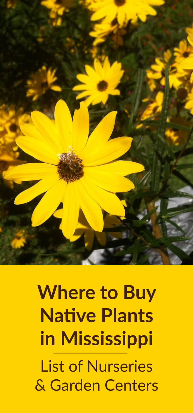 Where To Buy Native Plants in Mississippi: Plant nurseries, landscaping companies, and garden centers in Mississippi that sell native plants. Directory includes retail and wholesale.