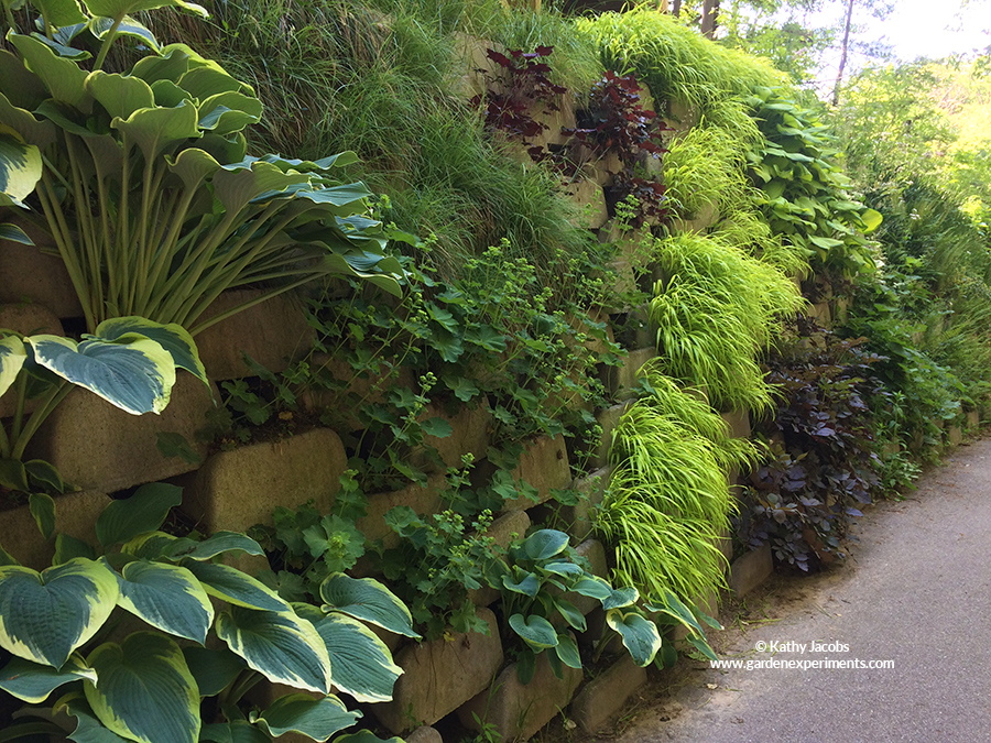 Living Wall Of Shade Plants ...