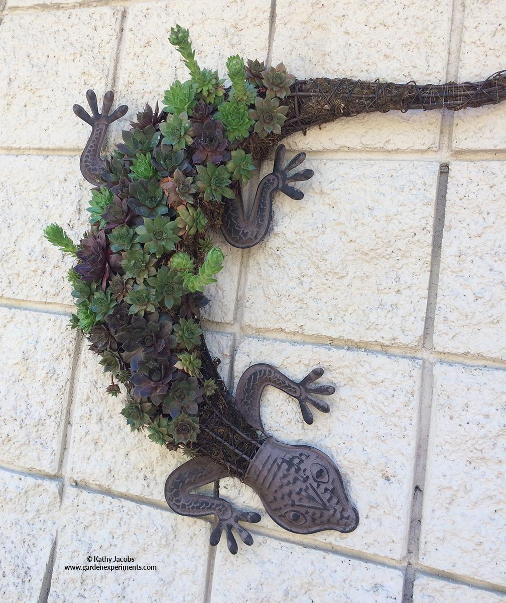 Gecko Succulent Wall Planter