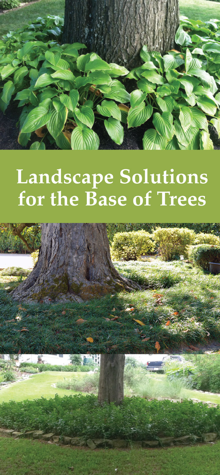 Landscape Solutions for the Base of Trees on Backyard Landscaping Ideas With Trees id=78166