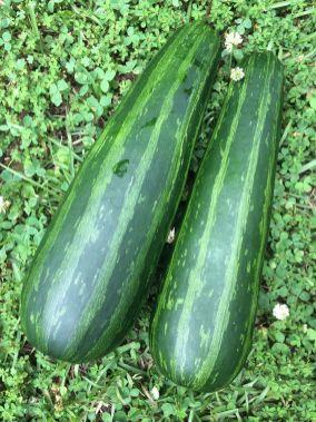 zucchini-19