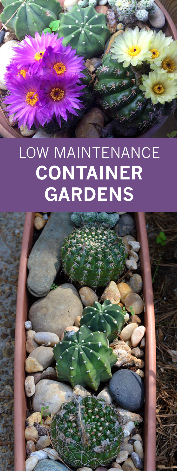 Low Maintenance Container Gardens