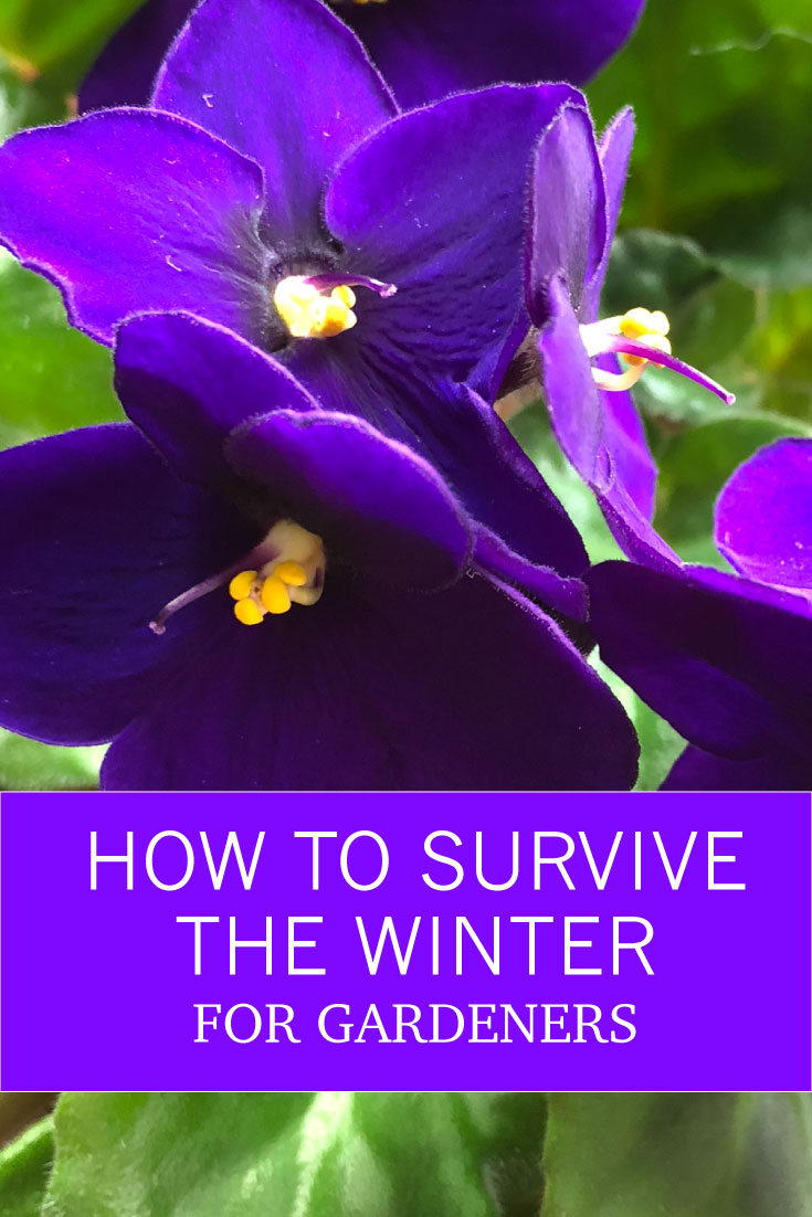 How to Survive the Winter: for Gardeners -- my advice to all you fellow gardeners is, to survive the winter, go out to your nearest garden center and pick out a few flowering indoor plants that will bring in some sunshine for you and make you smile.
