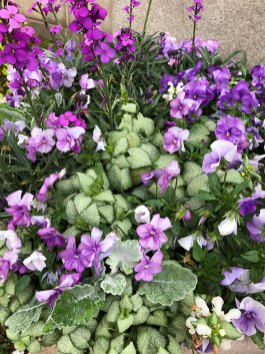 Purple and white container garden