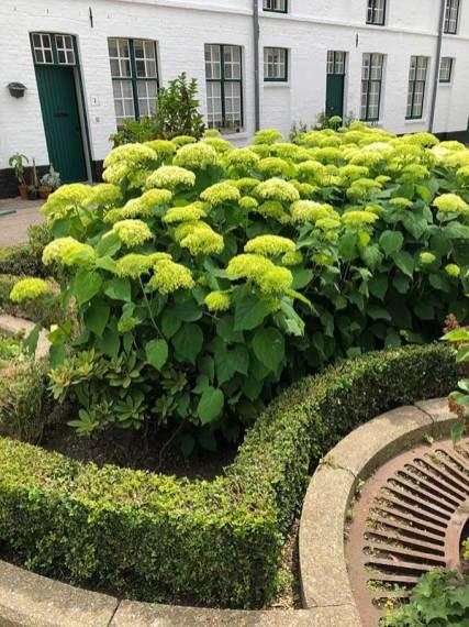 planters5