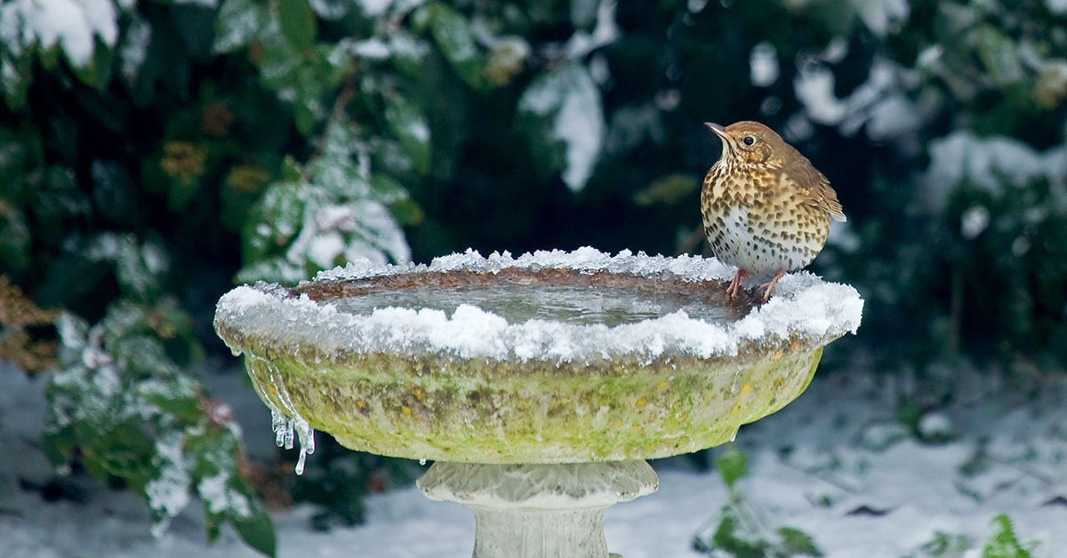 Frozen bird bath with bird sitting on the edge
