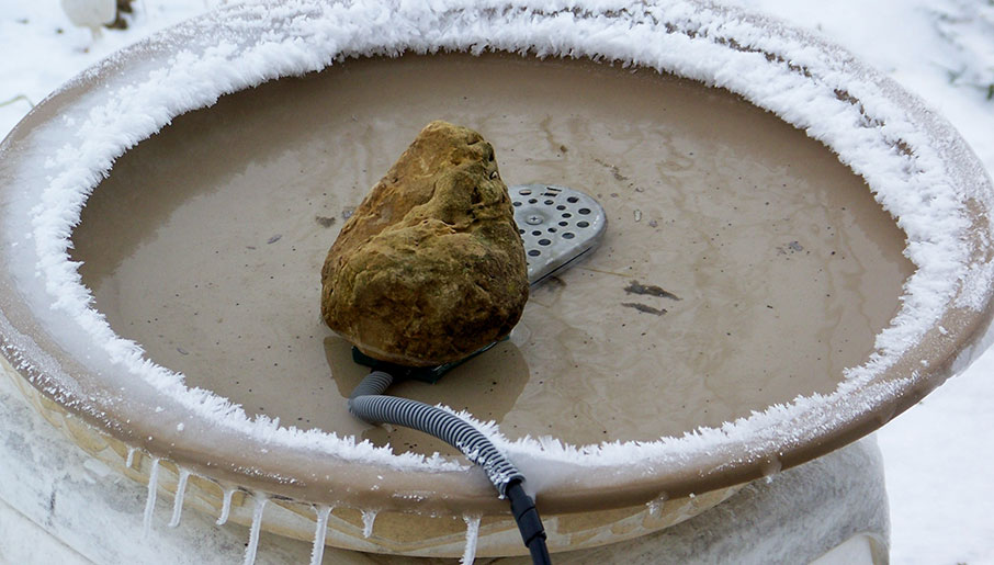 Bird bath with a heater in the water and a rock weighing down the heater