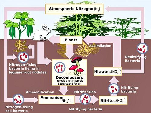 Fertilizer - plant nutrients - nitrogen cycle