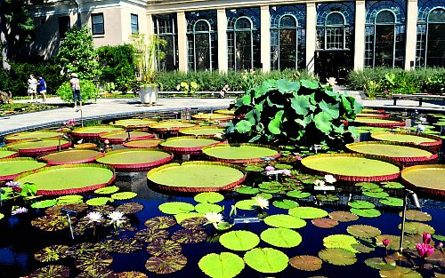 Water lily pond at Longwood Gardens, by Robert Pavlis