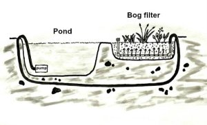 Bog filter use for growing plants and cleaning pond water, illustration from Building Natural Ponds