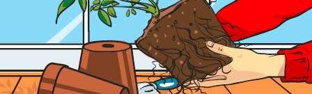 Image of a pair of hands removing a root ball from a pot.