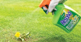 How To Get Rid Of Lawn Weeds Garden Advice Westland Garden Health