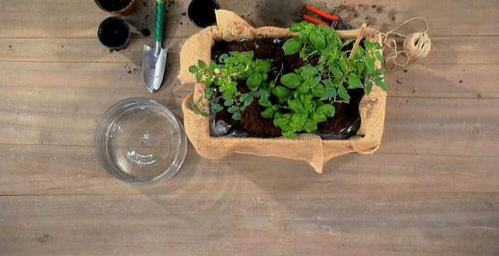 come fare un orto in cassetta fai da te per terrazzo o