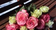 バラの長尺苗と大苗の違い