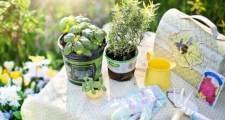 花壇や植木鉢のダンゴムシ対策
