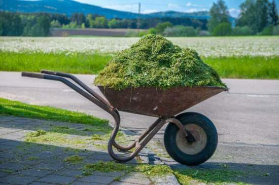 grass clippings for mulch