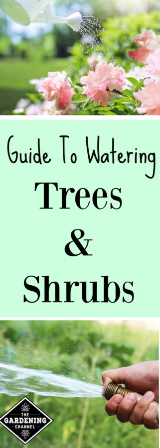 How to Water Trees and Shrubs