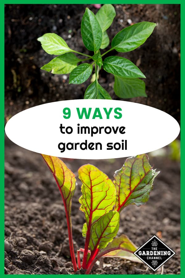 paprika peppers growing in garden and swiss chard planted with text overlay nine ways to improve garden soil
