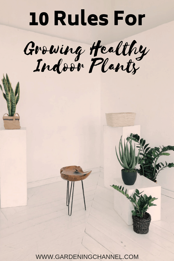 houseplants on white background in corner of house with text overlay ten rules for growing healthy indoor plants