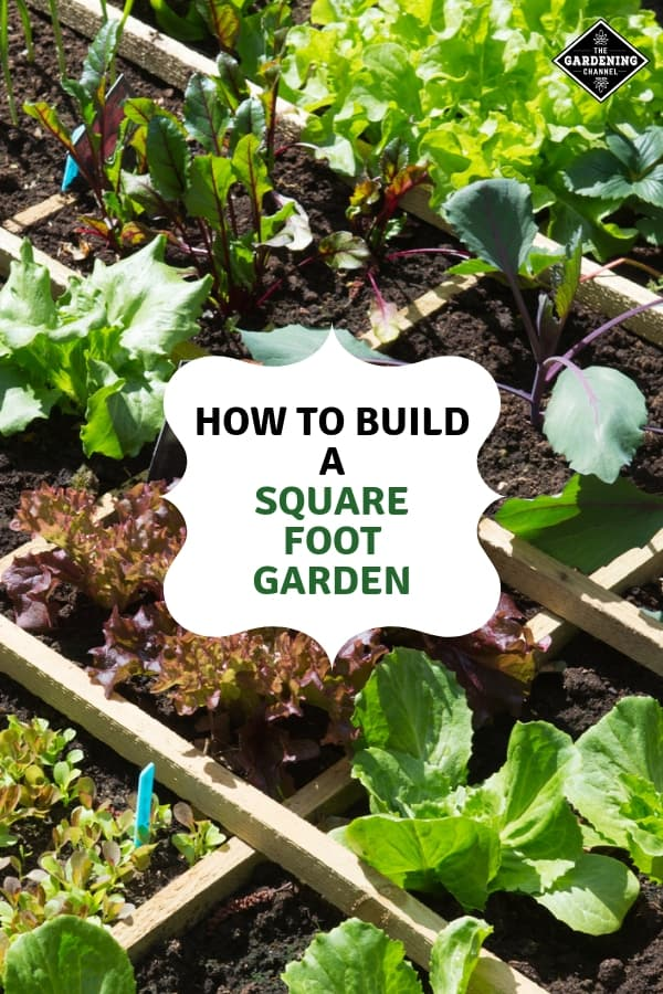 detail of square foot garden with text overlay how to build a square foot garden