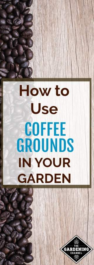 How to use coffee grounds in the garden
