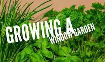 grow a kitchen counter garden