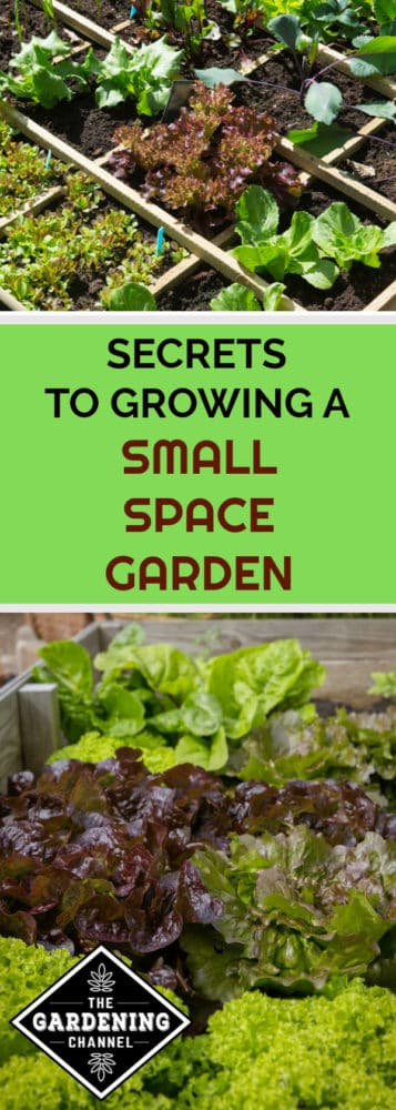 square foot garden and raised bed garden with text overlay secrets to growing a small space garden