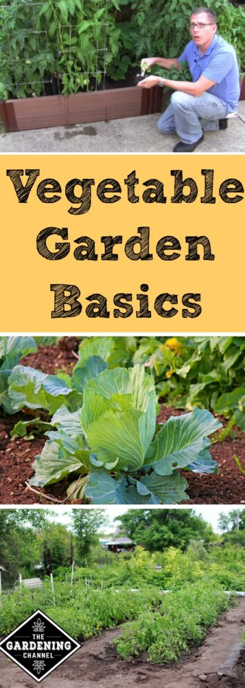 Soon it will be time to get back in the garden. Learn the basics of vegetable gardening.