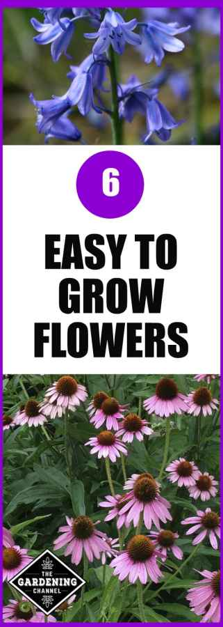 grow easy flowers