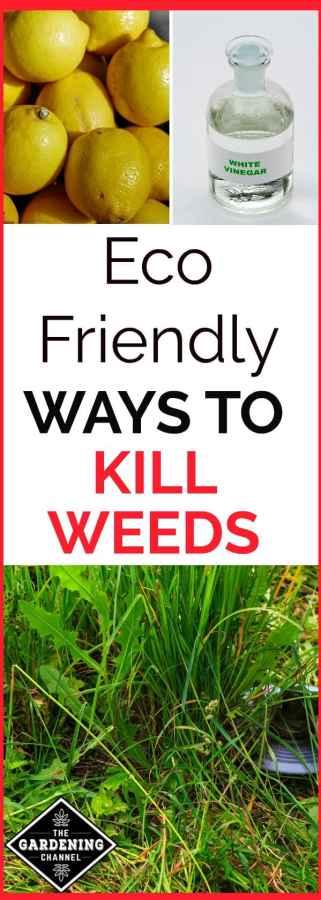 eco friendly weed killers