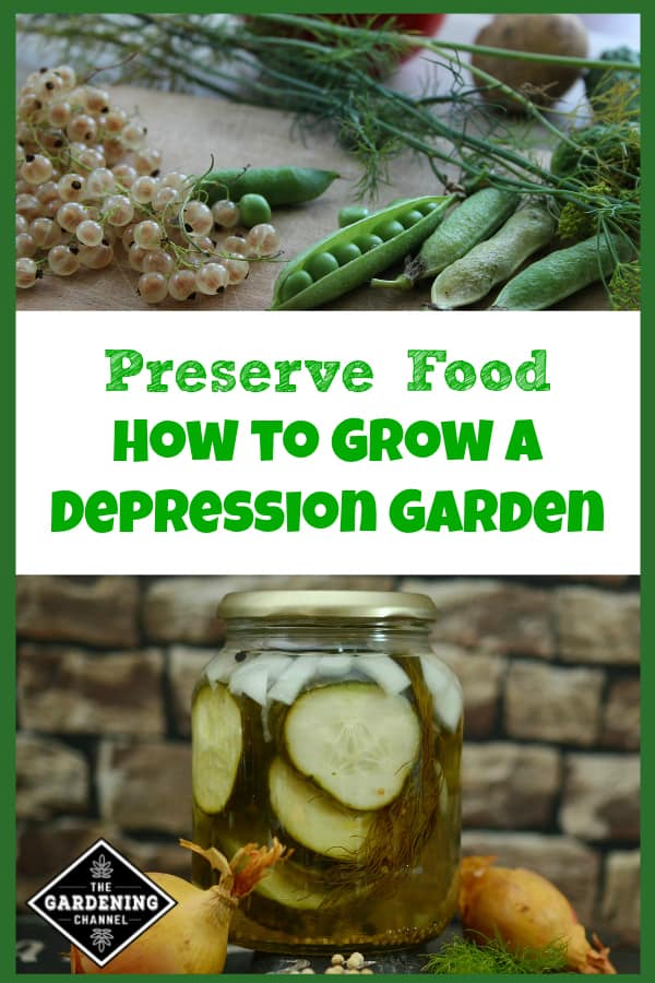 harvested food from garden pickled cucumbers with text overlay preserve food grow a depression garden
