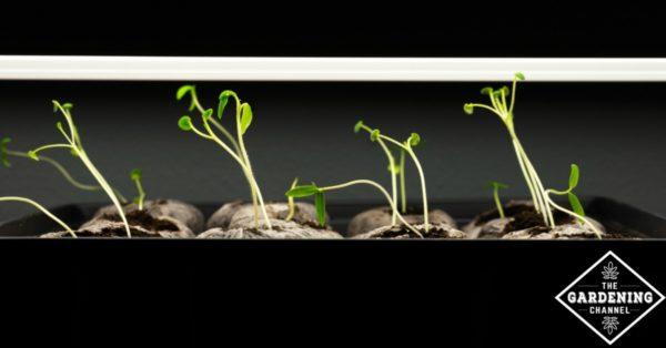 using grow lights
