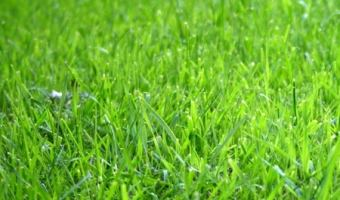 How to Feed Your Lawn Without Chemicals
