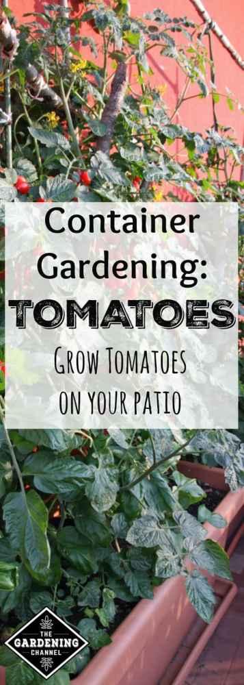 balcony tomato planter garden with text overlay container gardening tomatoes grow tomatoes on your patio
