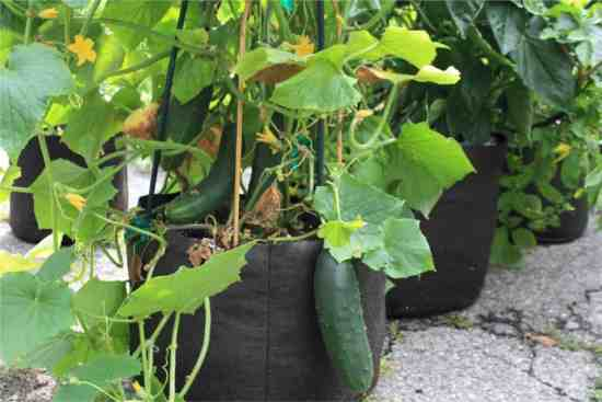 smart pot grow bags