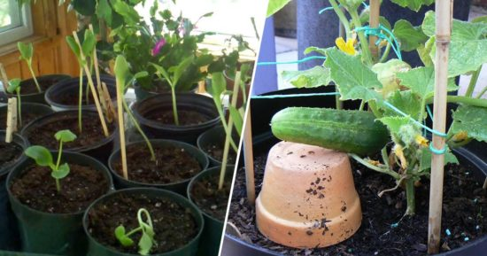 Grow A Garden In Pots Grow cucumbers in pots with these easy tips gardening channel learn to grow cucumbers in containers workwithnaturefo
