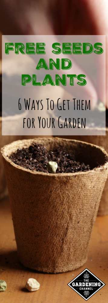 planting and starting seeds in seed starting pots with text overlay free seeds and plants six ways to get them for your garden