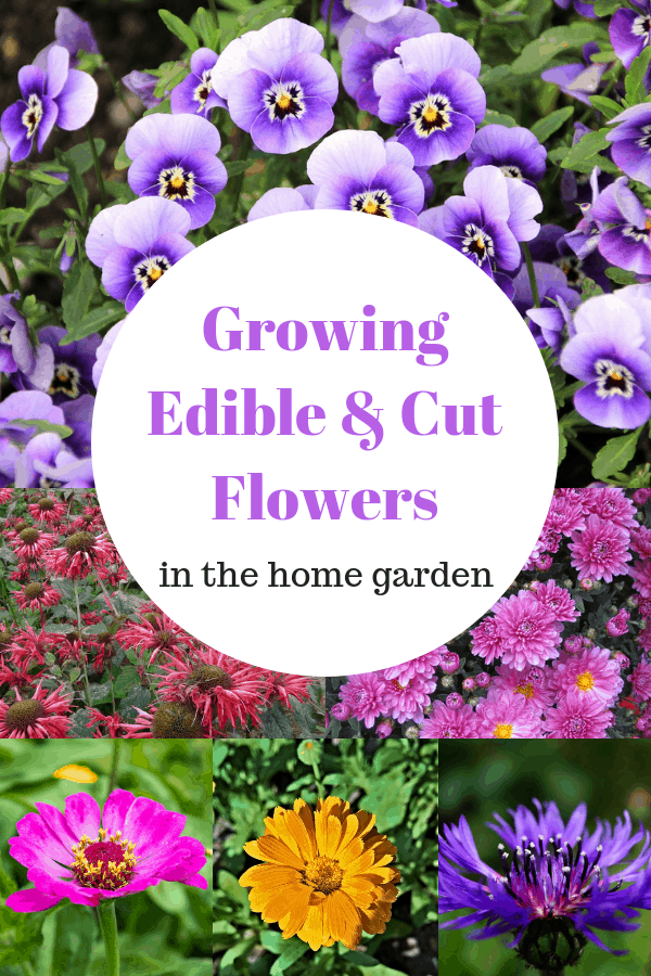 pansies bee balm mums zinnias calendula cornflower with text overlay growing edible and cut flowers in the home garden