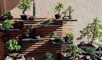 Gardening Tips for Bonsai Care