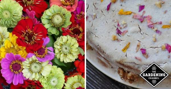 cut zinnia flowers and edible flowers on a cake