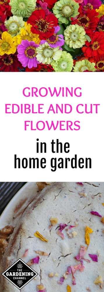 cut zinnia flowers and edilbe flowers decorating cake with text overlay growing edible and cut flowers in the home garden