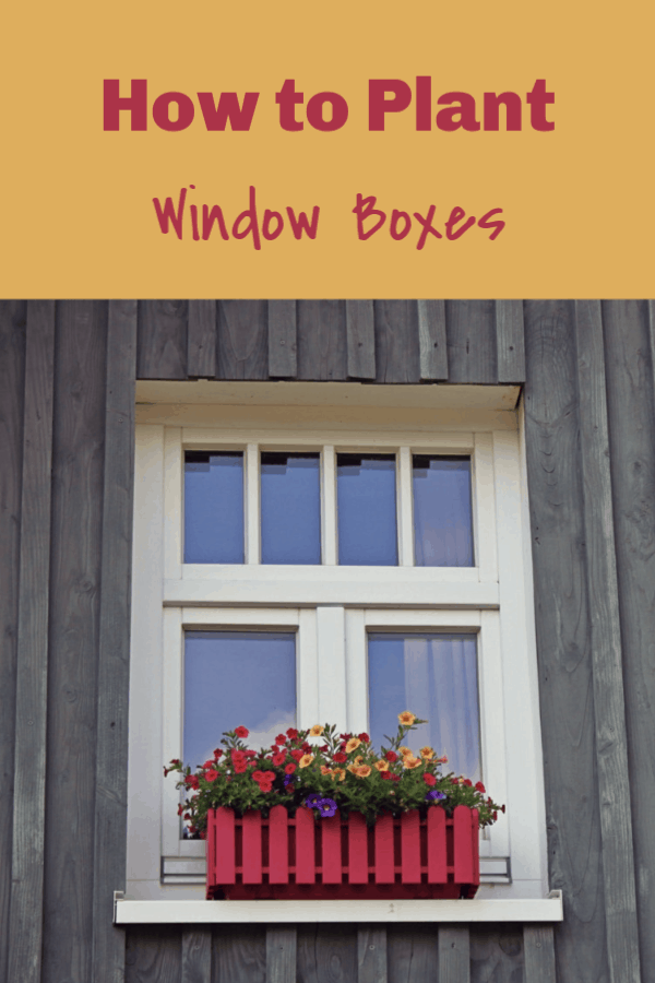 window box with text overlay how to plant window boxes